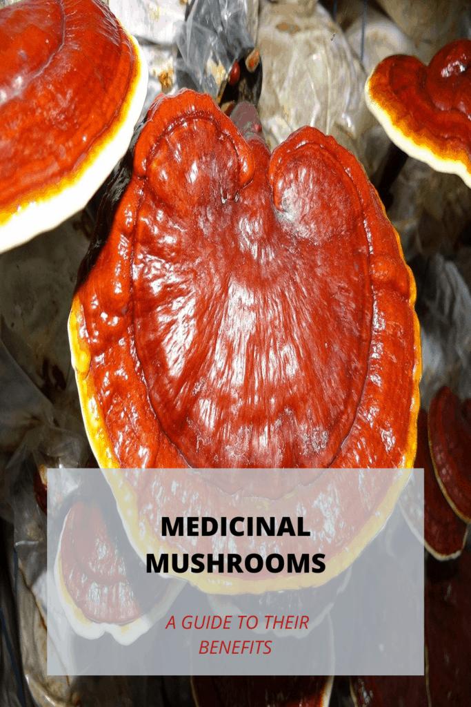 Medicinal mushrooms - Reishi