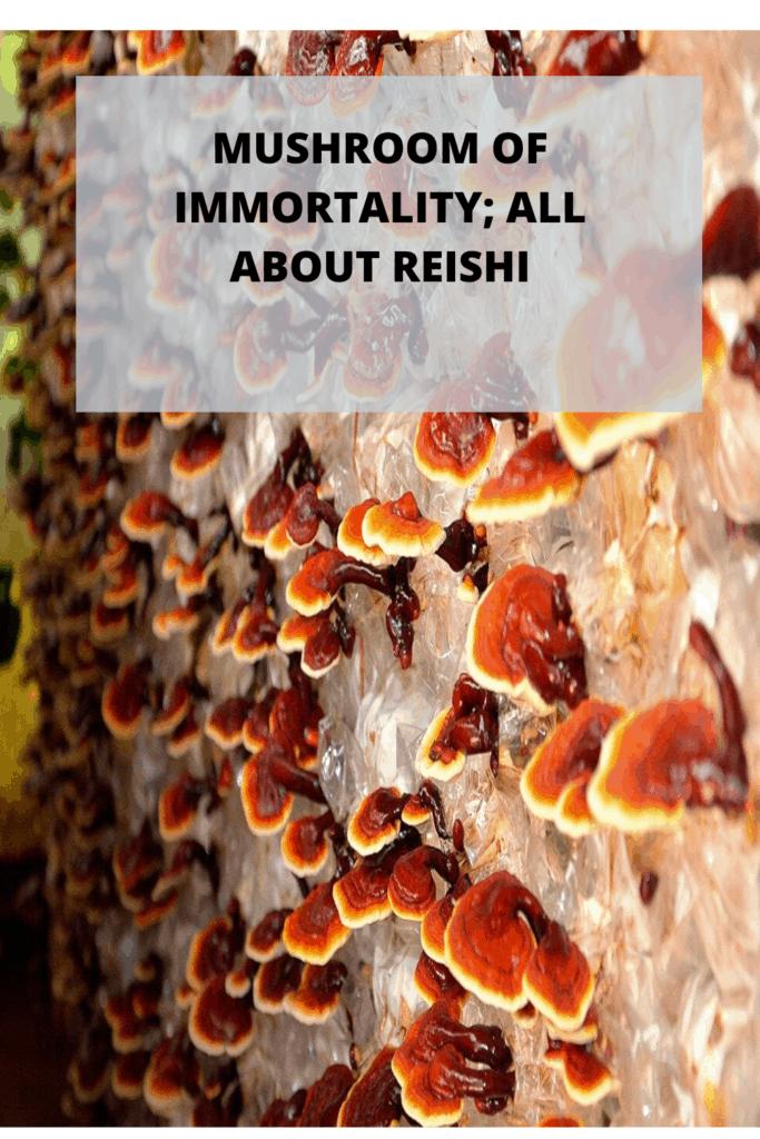 Reishi - Mushroom of immortality