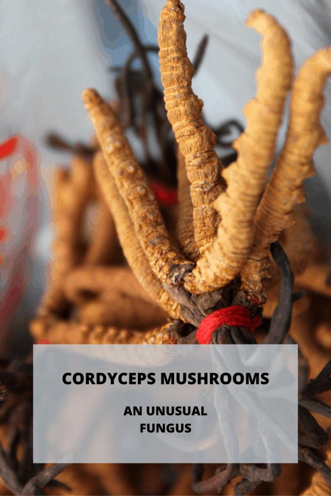 Cordyceps - An Unusual Fungus